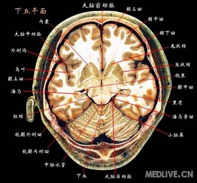 头颅ct断层解剖 头颅ct断层解剖图 图片大全 泸州资讯网-被斩首的美女