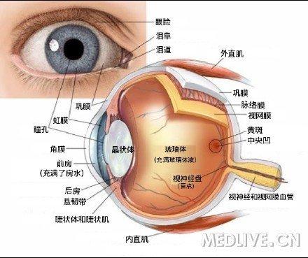 眼球解剖结构示意图